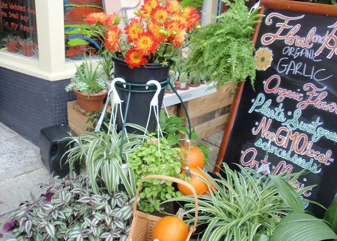 Thursday october 30 - Hardy office plants ...